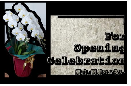 開店・開業のお祝い